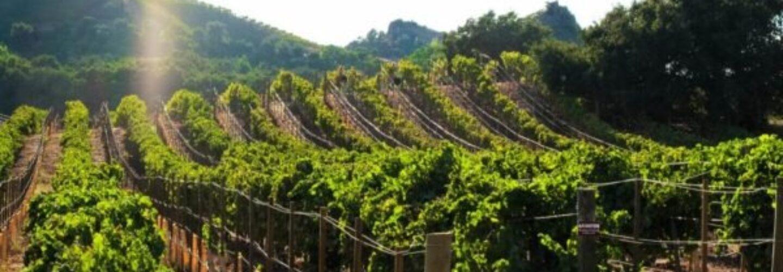 Malibu Winery